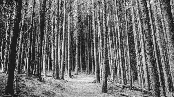 Heceta Head Trail Hobbit Trail Oregon Art | Shaun McGrath Photography