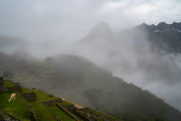 Llama At Machu Picchu Photography Art | Kit Noble Photography