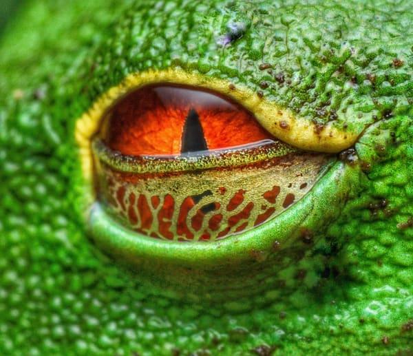 Frog Eye Art | Danny Johananoff