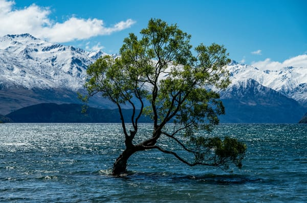 Wanaka Tree Photography Art | Kit Noble Photography