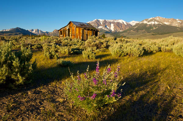 a old shack in early morning light on hwy 395 with the sierra nevadas in the background