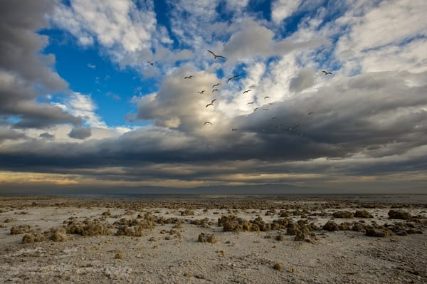 photo at the salton sea, looking like another planet