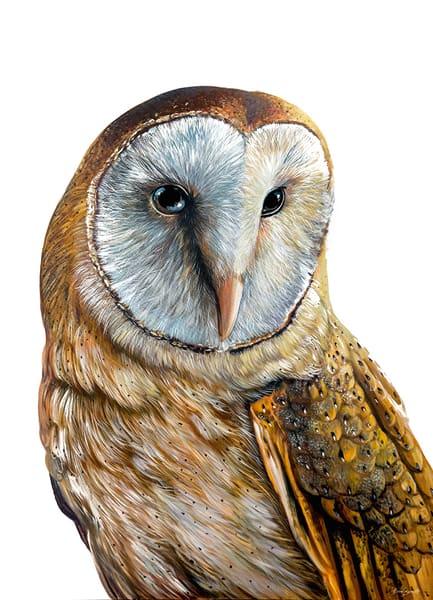 Sophie - Barn Owl