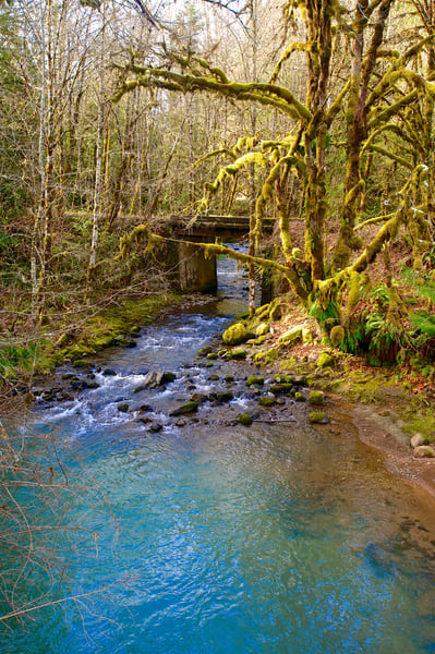 Oregon Creek Art | Shaun McGrath Photography