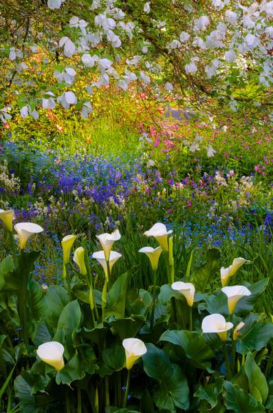 Owens Rose Garden