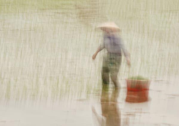Rice Planting Art | Danny Johananoff