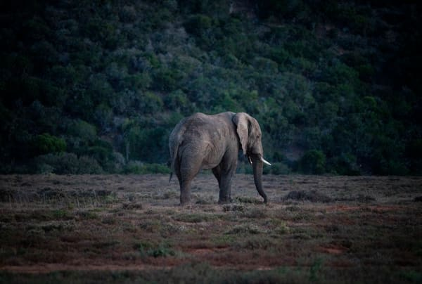 Elephant On Safari Photography Art | Kit Noble Photography