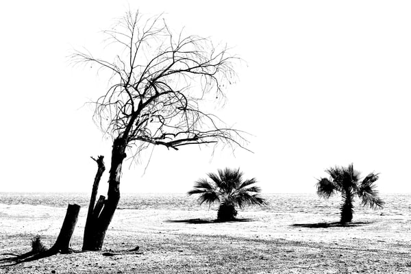 Salton Sea Stark Landscape Photography Art | Shaun McGrath Photography