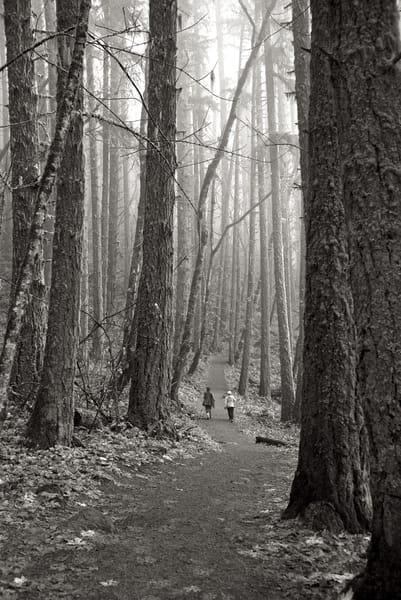 Walking In The Woods Art | Shaun McGrath Photography