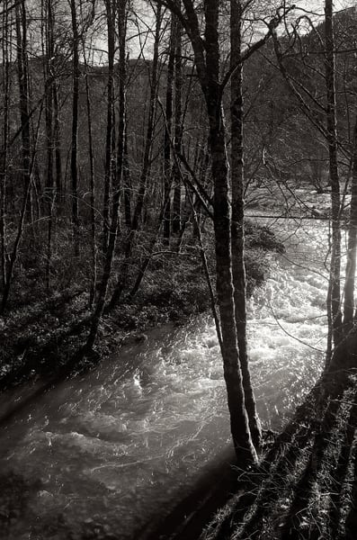River In The Woods Art | Shaun McGrath Photography