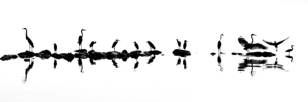 Wildlife At The Salton Sea Art | Shaun McGrath Photography