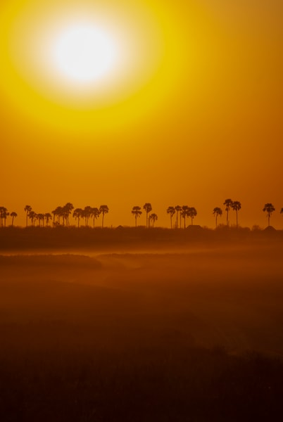Sunset, Kalahari Desert, Botswana Art | Roost Studios, Inc.