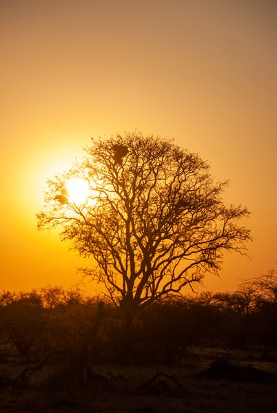 Sunset, Kalahari Desert, Botswana Art   Roost Studios, Inc.