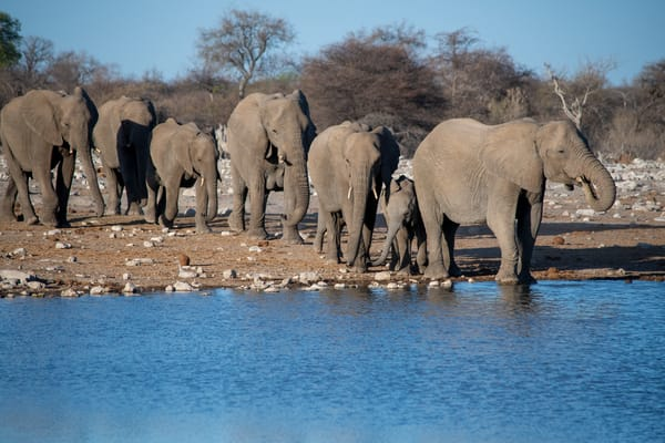 Family Of Elephants Arriving At A Watering Hole, Etosha, Namibia Art   Roost Studios, Inc.