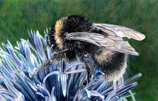 bee endangered