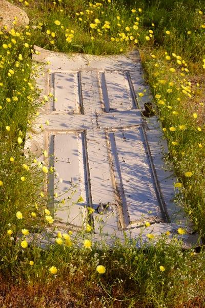 Door In The Wildflowers Art | Shaun McGrath Photography