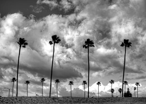 Lot of Palm Trees