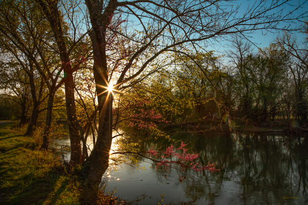Sunburst with Redbud on Spring River Photography 7240 | Spring Photos | Sunburst photography | Koral Martin Fine Art Photography