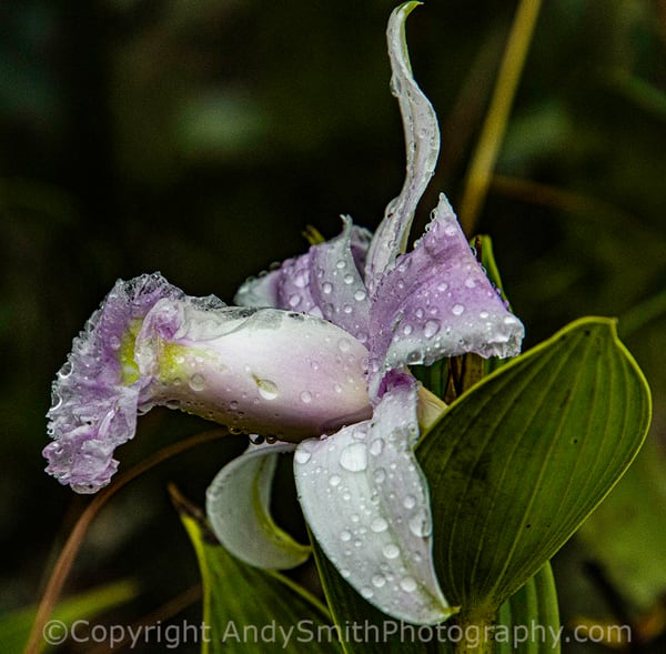 fine art photograph of an orchid beside the trail