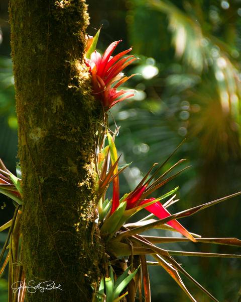 Jungle Flower Art | Black Mountain Gallery