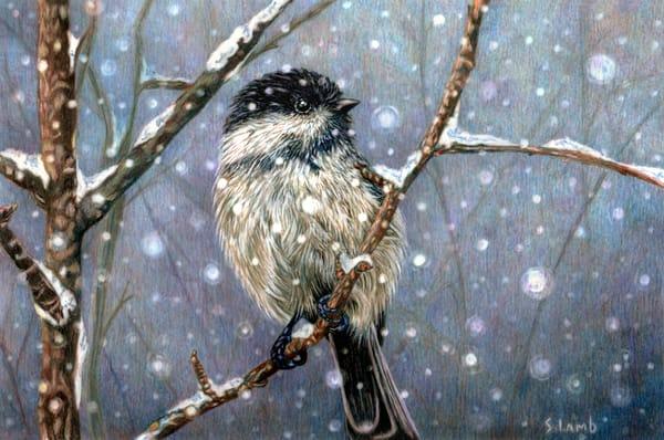 Winter Chickadee Art   Sherry Lamb Fine Art