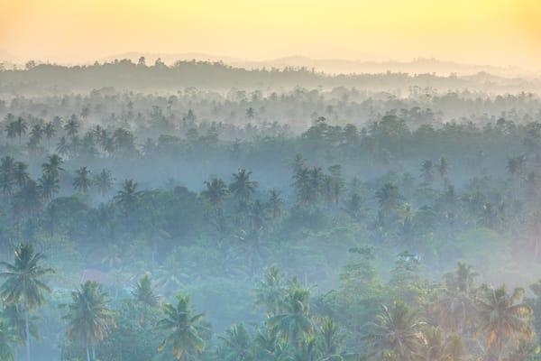 Sri Lankan Morning Photography Art | Laura Tidwell Photography