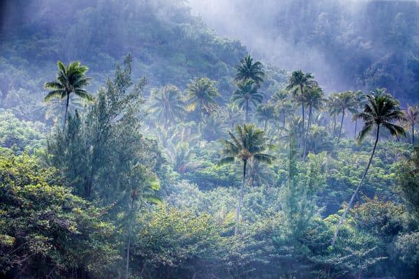 Tropical Dream Photography Art | Laura Tidwell Photography