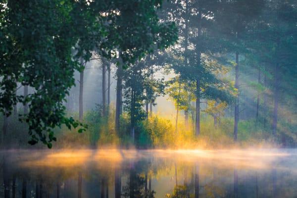 Golden Dream Photography Art   Laura Tidwell Photography