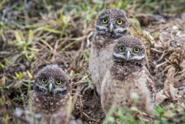 Inquisitive Trio Photography Art | Gingerich PhotoArt