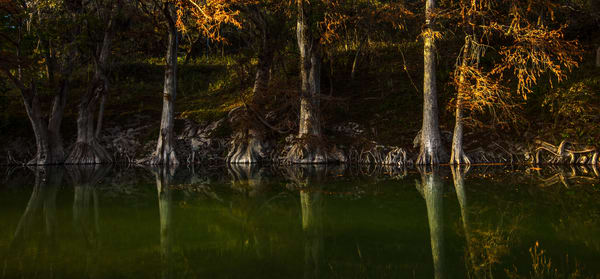 Guadalupe River, River, Cypress, trees, roots