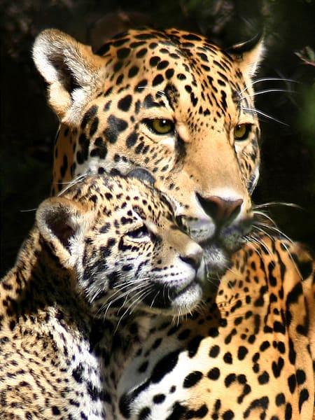 PBuzenius-Jaguar