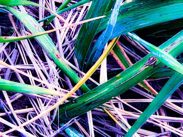 Sand Grass - Abstract