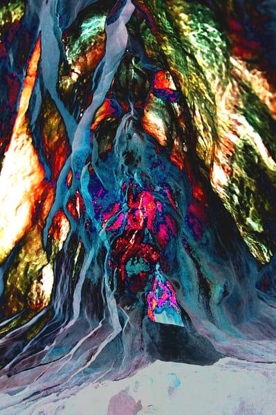 Banyon Tree Trunk Art | DocSaundersPhotography