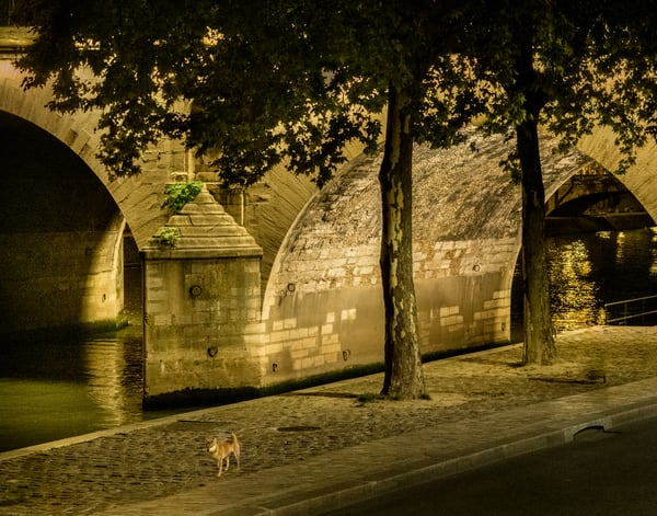 Dog Walking Along The Seine, Paris/sold by Ben Asen Photography