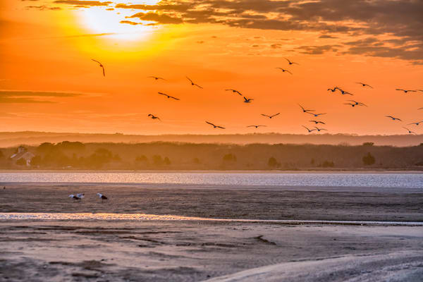Long Point Seagulls Art | Michael Blanchard Inspirational Photography - Crossroads Gallery