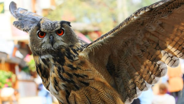 Owl  Art | DocSaundersPhotography