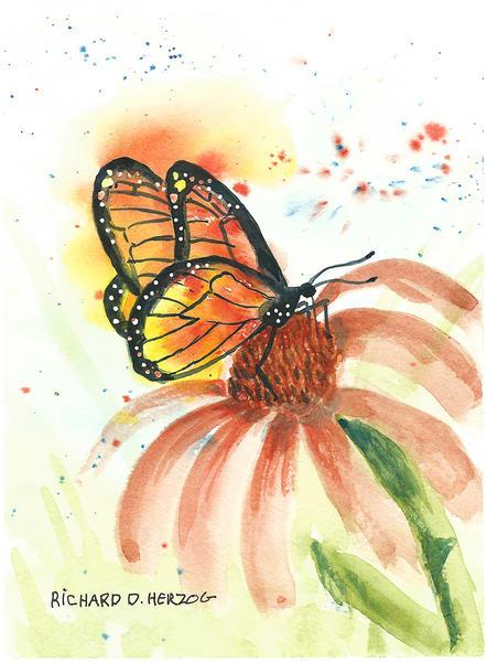 Butterfly 3 Art | Cincy Artwork