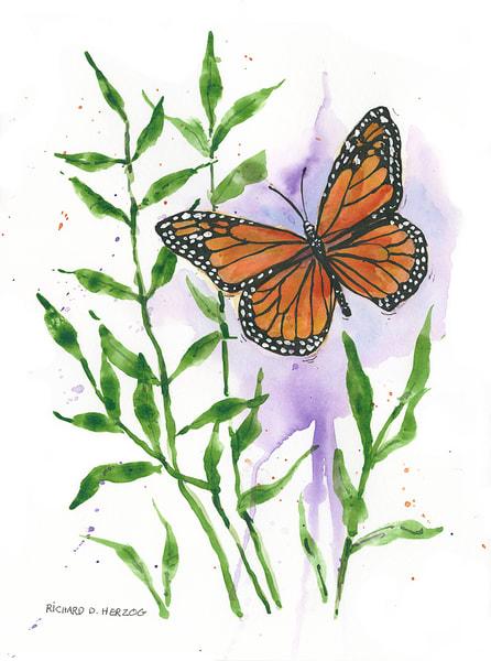 Butterfly 5 Art | Cincy Artwork