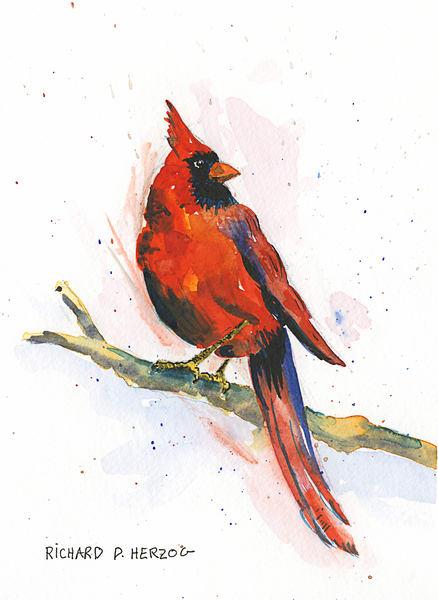 Cardinal 2 Art | Cincy Artwork