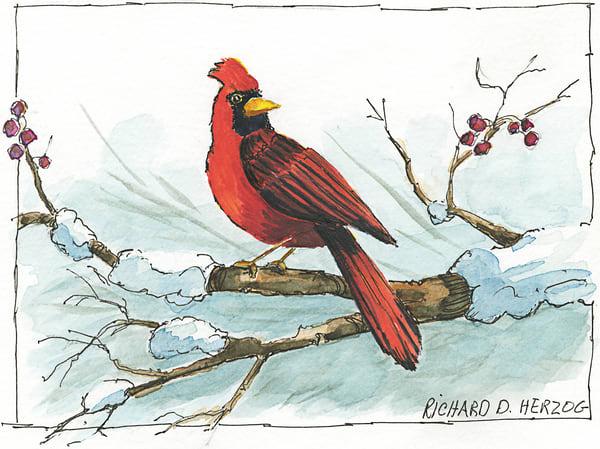 Cardinal 4 Art | Cincy Artwork