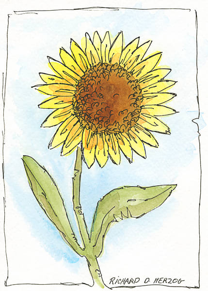 Sunflowers 3 Art | Cincy Artwork