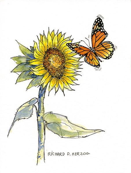 Sunflowers 7 Art | Cincy Artwork