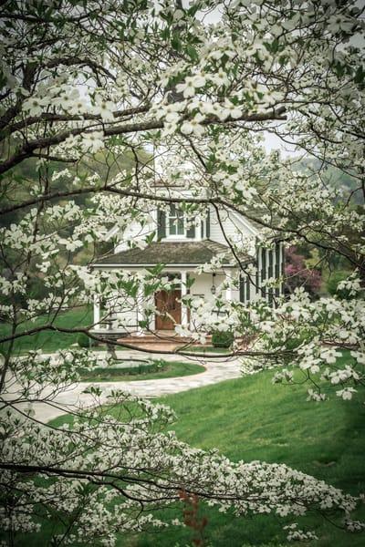 NRyder-Dogwoods-Big-Cedar-Chapel