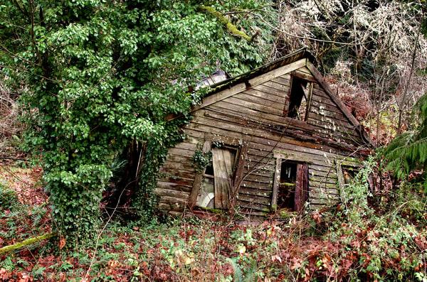photos of a dilapidated house outside of eugene, oregon