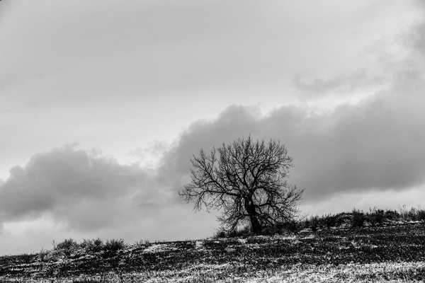 Winter Tree, Co. Photography Art | Creighton Images