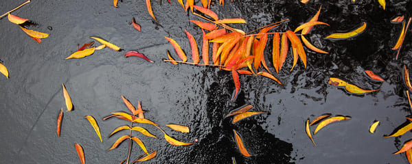 Orange Leaves on water create an abstract pattern of art. This photograph is available in many sizes, but looks the best printed and framed big!