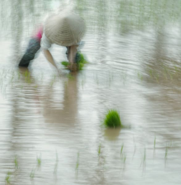 The Greenest Rice Art | Danny Johananoff