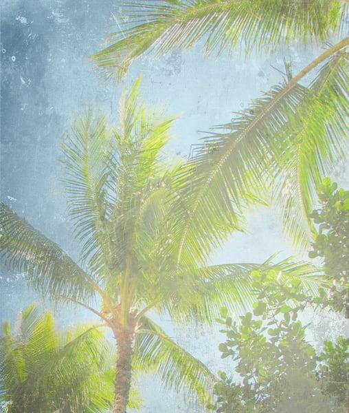Palm Saky