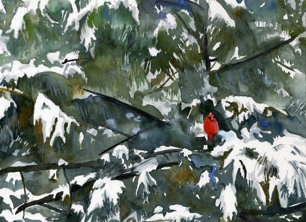 Cardinal & Pine