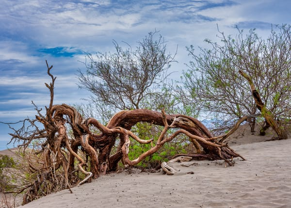 Death Valley 1250 Color Photography Art | Colin Murray Photography LLC